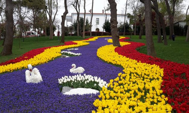 Isztambuli tulipánfesztivál